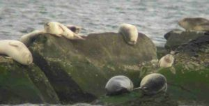 seals: nature as inspiration