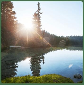 sun-tree-lake