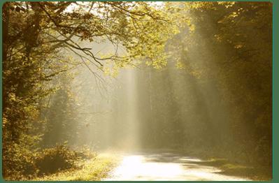 light-through-trees-sm