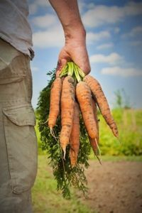 daniela carrots